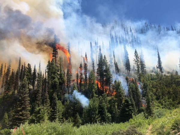 2019's Canyon Fire that burned west of Stanley, Idaho