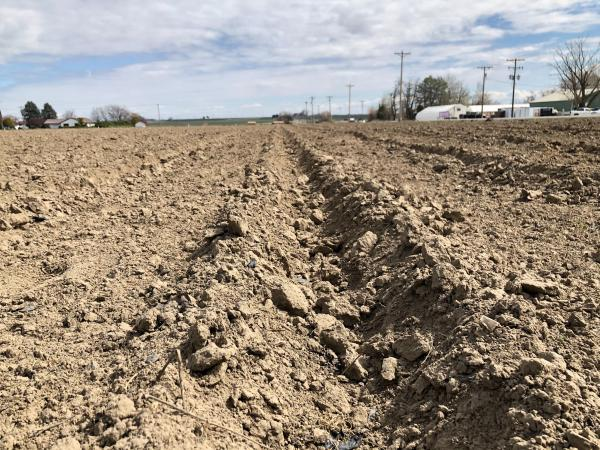 Freshly planted furrows span out across the Columbia Basin as farmers get ready for the coming season as worries of COVID-19 spread in central and eastern Washington.