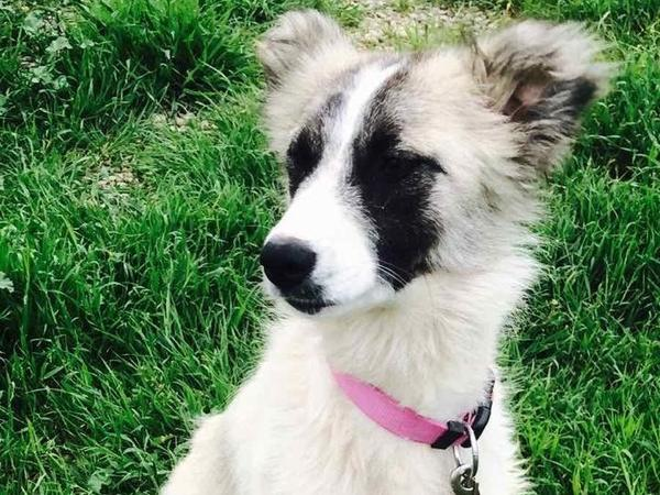 Rumi is currently in quarantine in Iraq, and under the care of the Puppy Rescue Mission, she's getting healthy to meet her adoptive family at Fort Bliss, Texas.