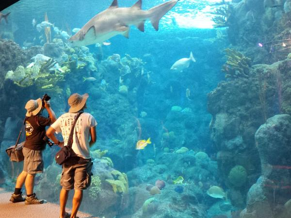 Destination marketing organizations (DMOs) like Visit Tampa Bay promote tourist and travel activities like the Florida Aquarium. They're struggling to recover from the economic impact of coronavirus.