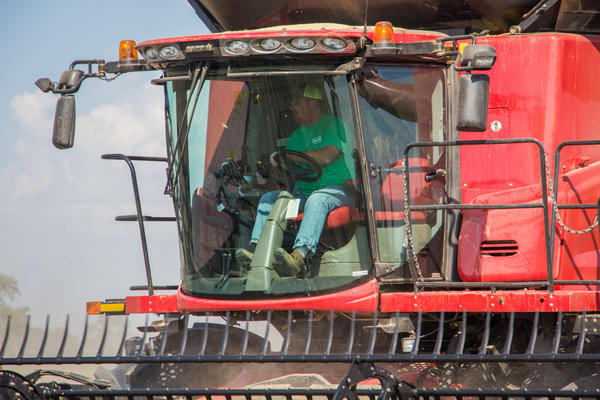 "Brent Henderson harvests soybeans on his farm near Weona, Ark., in 2017. That crop showed symptoms of dicamba exposure. Henderson switched to Xtend soybeans the following year, he says, as ""insurance"" against future damage."