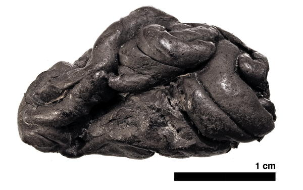 A piece of birch pitch from Syltholm, in southern Denmark, has proved to be a remarkable source of ancient human DNA.