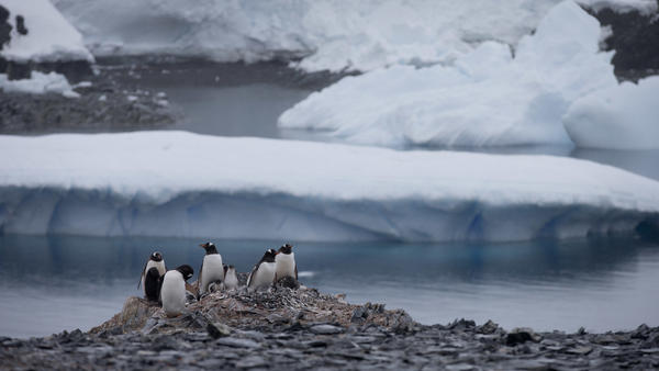 Penguins gather near a Chilean research station on the Antarctic Peninsula, not far from the Argentine station that reported the record high temperature Thursday. World meteorological experts still need to verify the record, but it does fit with a broader pattern of warming on the continent.