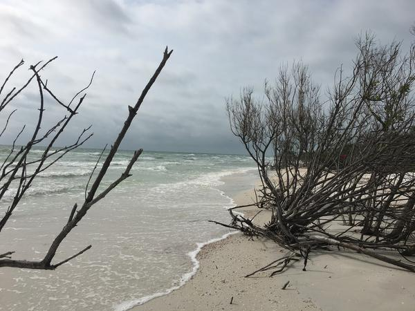 Honeymoon Island State Park in Dunedin, and other state parks across Florida, will reopen on May 4.