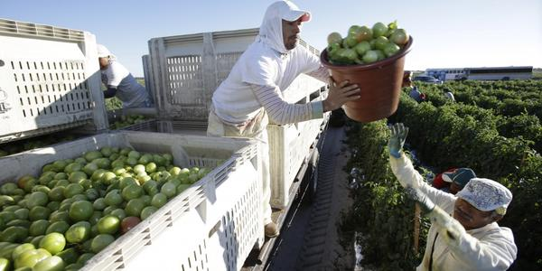 Florida's rising temperatures, higher than normal for 57 of the last 60 months, pose health risks to farm and other outdoor workers. A heat-illness prevention bill died in this year's legislative session.