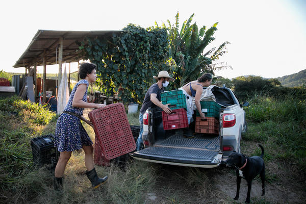 Liege Camila Pistore Veras, Rafael Duckur, and Joana Luiza Mendes (left to right) load boxes of produce into a truck at a farm outside of Sao Paulo, Brazil. This produce, and more, will be distributed in favelas, poor urban neighborhoods where residents live in crowded homes and lack basic sanitation.
