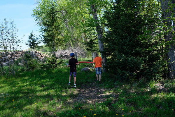 Lockey Strean and Mateo Joecks search for simple and compound leaf shapes at Cottonwood Elementary in Gallatin County, Montana on May 28, 2020.