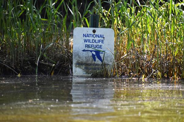 Flood waters caused minor damage to the Shiawassee National Wildlife Refuge's infrastructure, but researchers have yet to determine if more chemical contamination was deposited.