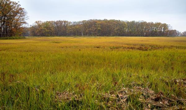 The marshes at Mass. Audubon's Rough Meadows Wildlife Sanctuary in Rowley (Robin Lubbock/WBUR)