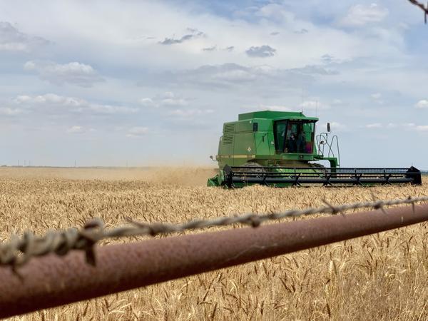 A combine harvests wheat on Sheri Glazier's family farm near Loyal, Oklahoma.