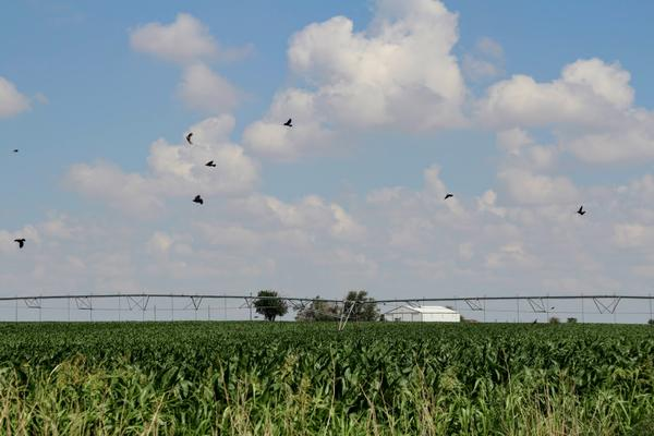 Kansas' Big 1st Congressional District comprises 63 counties where agriculture is central to the economy.