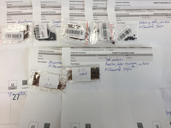 The USDA analyzes unsolicited seeds sent in the mail from abroad to determine if they're invasive plant species.