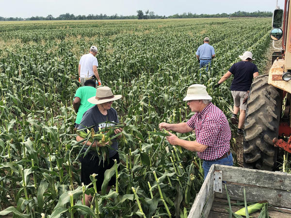 Students and staff from Eden Theological Seminary collect leftover corn from a field in Vincennes, Indiana. Lonny Vieck, right, has helped convince relatives and neighbors in the small farming community to allow volunteers from the seminary to collect excess produce from their farms.