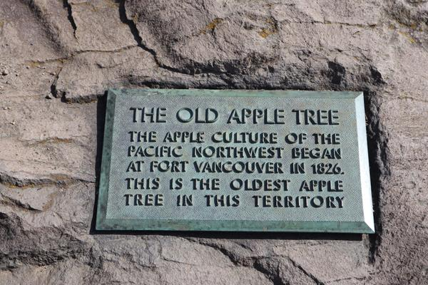 The long-standing plaque at the foot of the Old Apple Tree testifies to how the community recognized the significance of the tree early on.