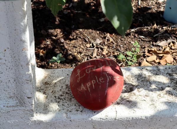 Tree lovers left offerings of flowers, mementos and this painted rock when word spread of the death of the oldest apple tree in the Pacific Northwest.