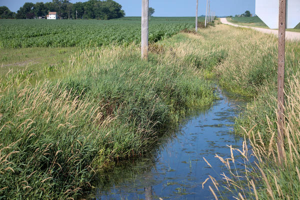 Ray Williams bought this land just north of the small town of Dumont, in Butler County, Iowa.