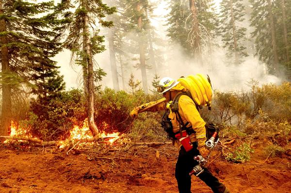 Cal Fire Battalion Chief Craig Newell carries hose while battling the North Complex Fire in Plumas National Forest, Calif., on Monday.