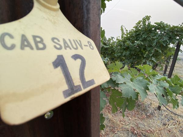 Recent wildfires and associated smoke that innundated the Northwest in September means grape growers and winemakers are scrambling to test for smoke taint.