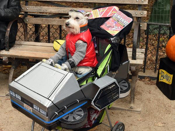 A dog dressed as Marty McFly from <em>Back to the Future</em> attends the Tompkins Square Halloween Dog Parade in 2015. New research says time travel might be possible without the problems McFly encountered.