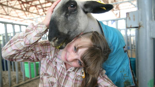 Danielle Long, 12, is one of hundreds of kids who were able to show their animals at a revamped version of the Mesa County Fair in western Colorado. She said she was happy to be there with Rocco, her lamb, but she knew it would be hard to see him auctioned off.