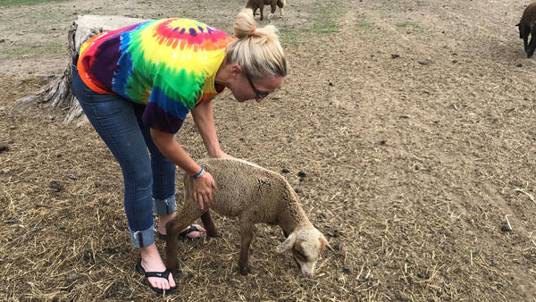 Cyndy Ash runs Jubilee Farms in Clinton, Illinois, where she raises sheep for wool.