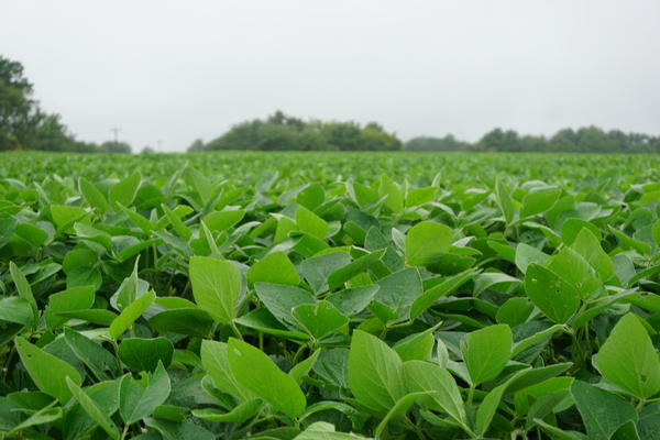 A soybean farm in central Missouri. Farmers received bonus payments this year to help mitigate coronavirus losses.