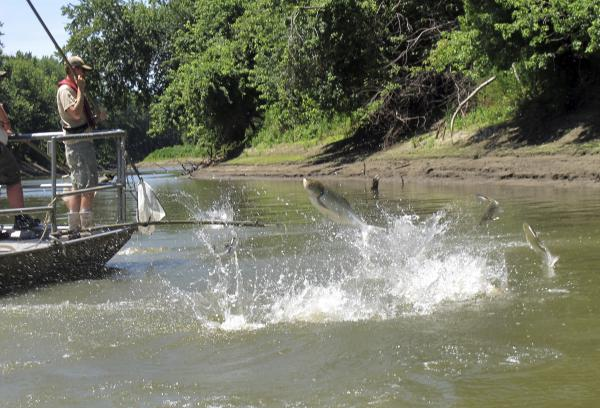 The Illinois Department of Natural Resources is sponsoring a statewide Asian carp cookout Saturday, continuing efforts to try and change the fish's image.