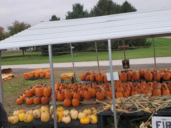 Zaiser Pumpkin Farm in Washington already has sold more pumpkins this year than ever before, with Halloween still over a week away.
