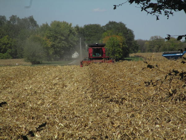 A farmer harvests derecho-damaged corn in central Iowa.