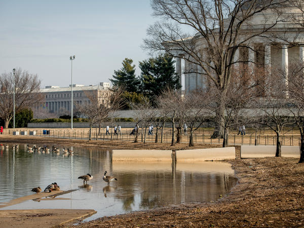 Increased car and foot traffic coupled with rising sea levels have driven parts of the Tidal Basin area underwater.
