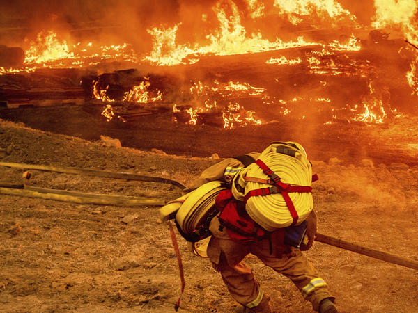 A firefighter carries a hose while battling the Glass Fire in a Calistoga, Calif., vineyard, Oct. 1