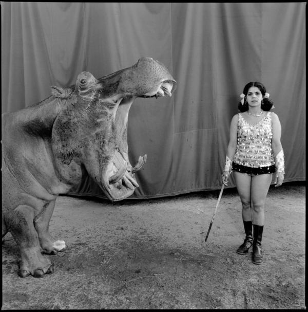 Hippopotamus and performer, Great Rayman Circus. Chennai, India, 1989.