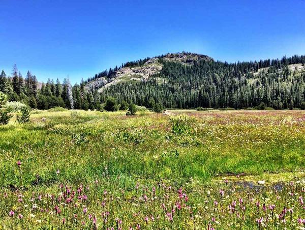 A meadow in the Sierra Nevada that was found to hold large quantities of carbon in the soil.