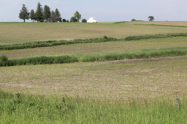 Iowa farmers are expected to have higher incomes in 2020 compared to 2019, thanks in large part to generous government payments.