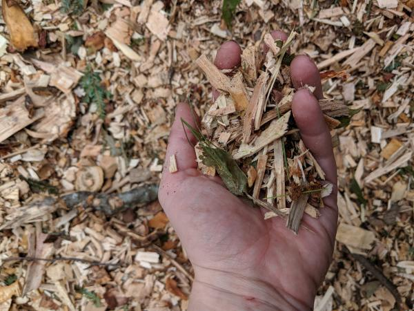 """Waste wood from a logging operation is chopped up into """"chips""""  to be burned in a biomass facility. (Annie Ropeik, NHPR)"""