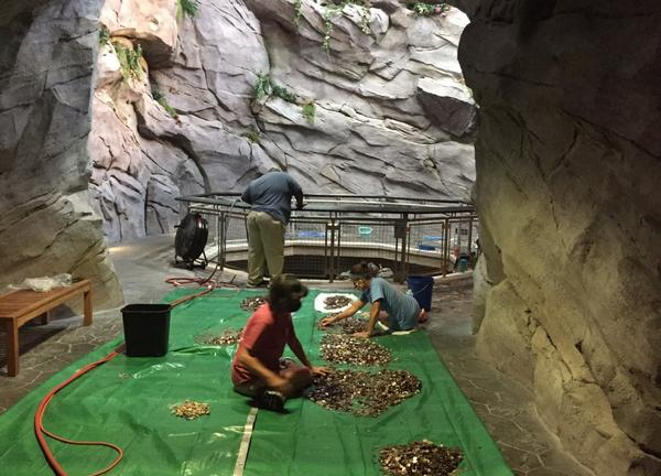 Staff at the North Carolina Aquarium at Pine Knoll Shores turned off a 30-foot waterfall and collected all the coins visitors had thrown into the water to make wishes. After cleaning the money, they'll put it toward the aquarium's expenses.