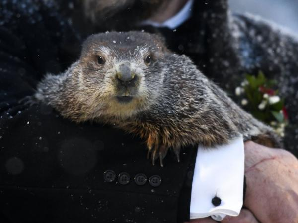 Groundhog Club handler A.J. Dereume holds Punxsutawney Phil at the 135th celebration of Groundhog Day on Gobbler's Knob in Punxsutawney, Pa. on Tuesday. The groundhog is said to have seen his shadow, signaling six more weeks of winter.