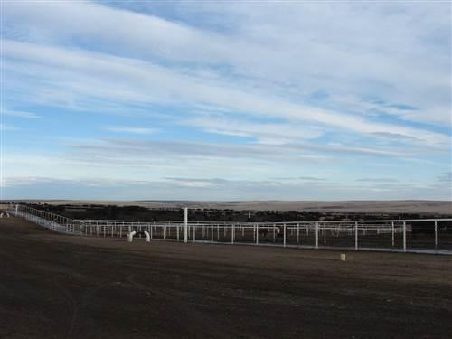 "Easterday's ""North Lot"" is one of the largest concentrated cattle feeding operations in Washington."
