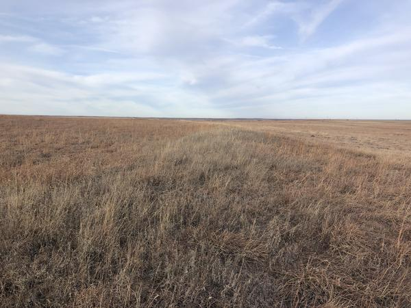 Farmers agree to conserve the land for 10 to 15 years and get yearly rental payments in return as a part of the Conservation Reserve Program.