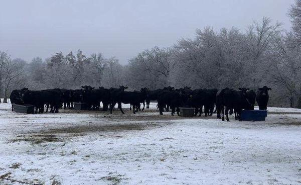 At his farm in Copiah County, Miss., Steve Smith is spending his days heading out into the cold to bust up frozen water troughs for his cattle.