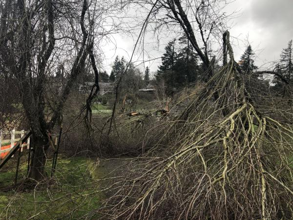 An all-too-common scene in the  Portland region: Downed tree limbs in West Linn on Monday, a week after the storm.