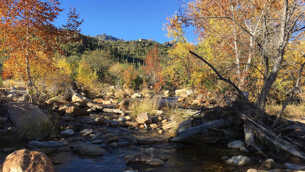Sabino Creek is a popular recreation site in Tucson whose waters flow intermittently. It is currently on the draft list of protected surface waters.