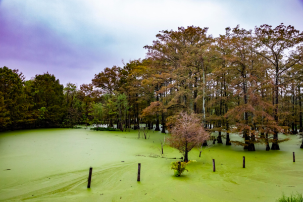 Groundwater is being stretched thin as Louisiana's population grows and the climate changes.