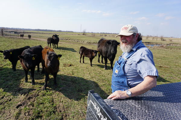 Cattle farmer Darvin Bentlage on his farm near Golden City, Missouri. His livestock are tagged with metal and plastic tags, and he is opposed to being forced to use electronic identification chips instead.