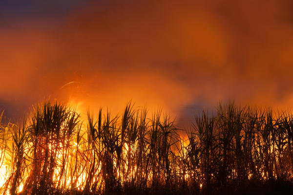 Advocates based in South Florida say a bill moving through the legislature will help protect the practice of sugarcane burning which they say causes negative health impacts to communities of color.