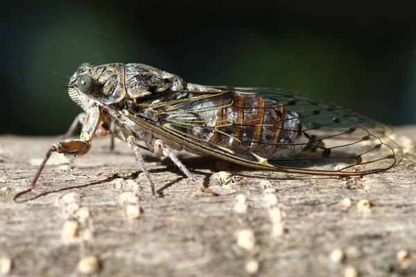 Cicadas. That's it, that's the caption. Not in a good way.