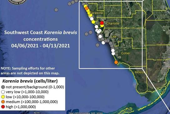 Elevated levels of Karenia Brevis, the organism that causes red tide, have been found off the coast of Sarasota.