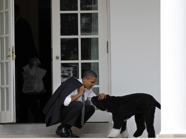 Then-President Barack Obama pets the family dog Bo outside the Oval Office of the White House.