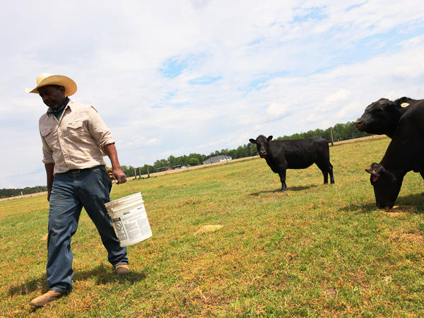 Handy Kennedy, founder of AgriUnity cooperative, feeds his cows on HK Farms earlier this year in Cobbtown, Ga. The AgriUnity cooperative is a group of Black farmers formed to better their chances of economic success.