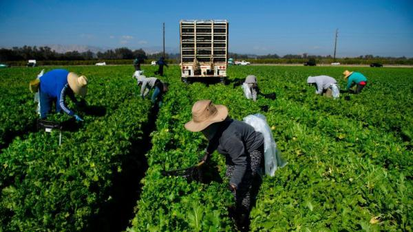 The Supreme Court found that a law that allowed farmworkers union organizers onto farm property during nonworking hours unconstitutionally appropriates private land.